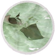 Round Beach Towel featuring the photograph Can't Catch Me by Carol Lynn Coronios