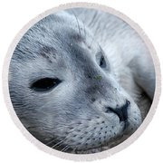 Round Beach Towel featuring the photograph Cape Ann Seal by Mike Martin