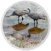 Cape Baron Geese On Maria Island 2 Round Beach Towel by Lexa Harpell
