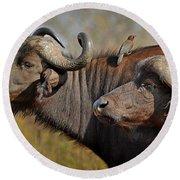 Cape Buffalo And Their Housekeeper Round Beach Towel