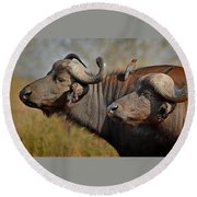 Cape Buffalo And Their Housekeeper Round Beach Towel by Joe Bonita