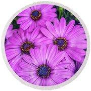 Cape Daisys - Purple Round Beach Towel