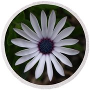 Cape Daisy Round Beach Towel