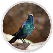 Cape Glossy Starling Round Beach Towel