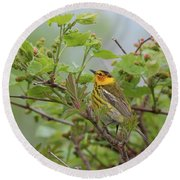 Cape May Warbler Round Beach Towel