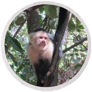 Capuchin Monkey 4 Round Beach Towel