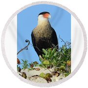 Round Beach Towel featuring the photograph Caracara Portrait by Debra Martz