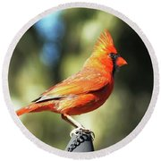 Cardinal All Dressed Up Round Beach Towel