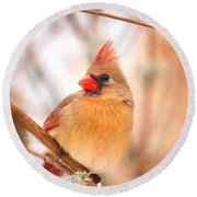 Round Beach Towel featuring the photograph Cardinal Bird Female by Peggy Franz