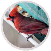 Cardinal Close Up Round Beach Towel