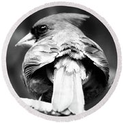 Cardinal In Black And White Round Beach Towel
