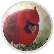 Round Beach Towel featuring the photograph Cardinal In Flowers by Debbie Portwood