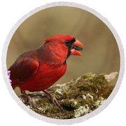 Cardinal In Spring Round Beach Towel