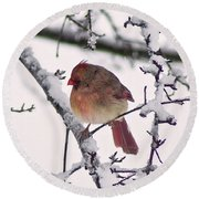 Cardinal In The Snow Round Beach Towel