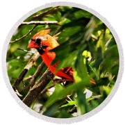 Cardinal In Tree Round Beach Towel