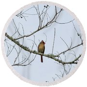 Round Beach Towel featuring the photograph Cardinal In Tree by Richard Rizzo