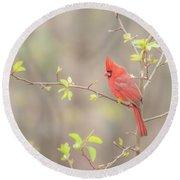 Cardinal In Tree Round Beach Towel