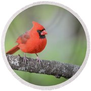 Cardinal On A Limb Round Beach Towel