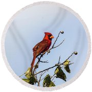 Round Beach Towel featuring the photograph Cardinal On Treetop by Robert Frederick