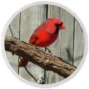 Cardinal Waiting For Spring Round Beach Towel
