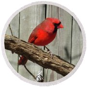 Cardinal Waiting For Spring Round Beach Towel