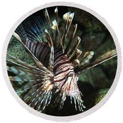 Caribbean Lion Fish Round Beach Towel