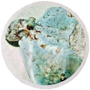 Round Beach Towel featuring the photograph Caribbean Reef Octopus - Eyes Of The Deep by Amy McDaniel