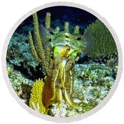 Round Beach Towel featuring the photograph Caribbean Squid At Night - Alien Of The Deep by Amy McDaniel
