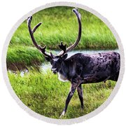 Round Beach Towel featuring the photograph Caribou by Anthony Jones