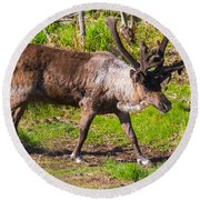 Caribou Antlers In Velvet Round Beach Towel by Allan Levin