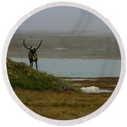 Caribou Fog Round Beach Towel by Anthony Jones