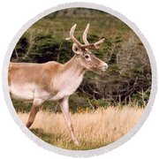 Caribou Round Beach Towel