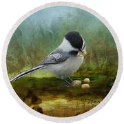 Carolina Chickadee Feeding Round Beach Towel