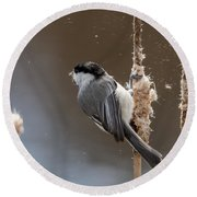 Carolina Chickadee Feeding On Cattail Round Beach Towel