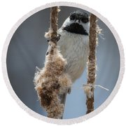 Carolina Chickadee On Cattails Round Beach Towel
