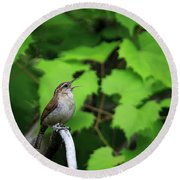 Round Beach Towel featuring the photograph Carolina Wren by Gary Hall