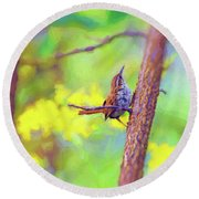 Round Beach Towel featuring the photograph Carolina Wren In The Autumn Forest by Kerri Farley
