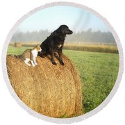 Cat And Dog On Hay Bale Round Beach Towel by Kent Lorentzen