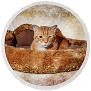 Cat Bed Round Beach Towel by Doug Long