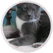 Cat Boticas Portrait  Round Beach Towel