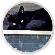 Cat Conditioner Round Beach Towel