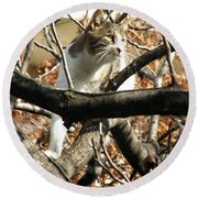 Cat Hunting Bird Round Beach Towel