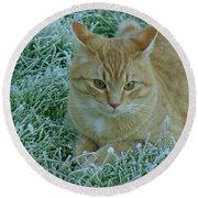 Cat In Frosty Grass Round Beach Towel by Shirley Heyn