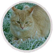 Cat In Frosty Grass Round Beach Towel