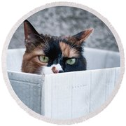 Round Beach Towel featuring the photograph Cat In The Box by Laura Melis