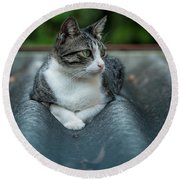 Cat In The Cradle Round Beach Towel