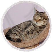 Cat-nap Round Beach Towel