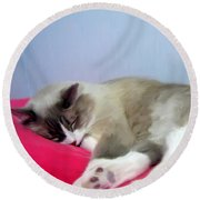 Cat Nap Round Beach Towel