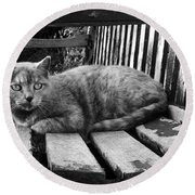 Cat On A Seat Round Beach Towel