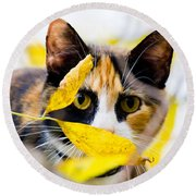 Cat On The Prowl Round Beach Towel